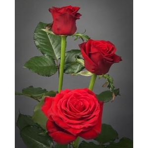 Роза Prestizh