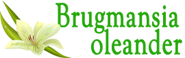 Интернет-магазин Бругмансия